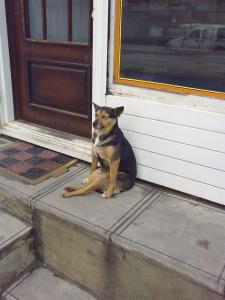 Собака-сидяка1.jpg